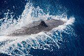 Dolphin 2