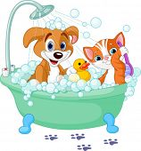 stock photo of soapy  - Very cute  Dog and Cat having a soapy bath - JPG