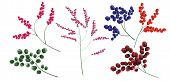 A Collection Of Elements For Design. A Collection Of Different Berries. Berries On The Branch. Blueb poster
