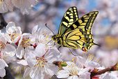 Butterfly and white flower. Nature composition.