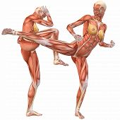 Female Human Body Anatomy-street Fight
