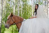 image of birchwood  - young woman in the dress of fiancee on a horse by a canicular day in a birchwood - JPG