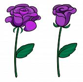 Illustration of two purple roses on a white background