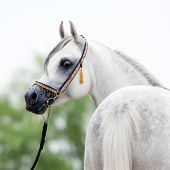 pic of stable horse  - White horse head - JPG