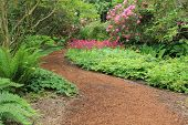 Beautiful woodland garden path in springtime. Also available in vertical.