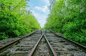 crossing of two railroads in green wood