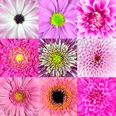 Collection Of Nine Pink Flower Macros