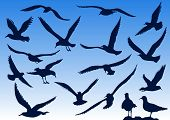 stock photo of nightingale  - Seagull silhouettes in the sky and nature - JPG