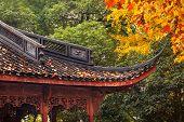 Ancient Chinese House Roof Autumn Leaves Tree West Lake Hangzhou Zhejiang China