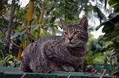 Portrait of a Six Toed Cat