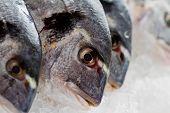 Seafood, fish - fresh sea dorada in ice, healthy food