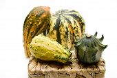 Pumpkin with phloem basket