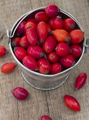 fresh red rosehips