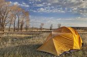 a  tent covered by frost in early morning next to stand of cottonwood in North Platte River valley in Wyoming