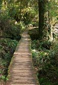 Wood Path Through Rain Forest