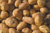 Cornish Potatoes
