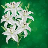 foto of day-lilies  - Greeting or invitation card with bouquet white lily flower - JPG