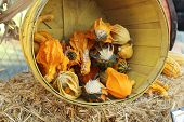 apple barrel with gourds