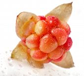 Single fresh cloudberry ( Rubus chamaemorus) close up macro  isolated on white background