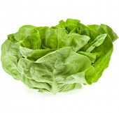 Bunch of Fresh Green Salad  Isolated On White Background