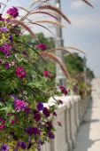 Colorful Flower Basket On Bridge
