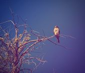 a small kestrel sitting on a branch done with a vintage retro instagram filter