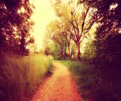 a path going though a forest or park with trees with autumn leaves done with a retro vintage instagram filter