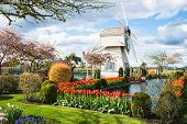 Skagit Valley Tulip Town Festival Windmill