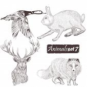 Collection Of Vector Detailed Animals For Design