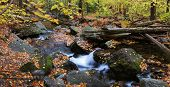 Autumn creek closeup panorama with yellow maple trees and foliage on rocks in forest with tree branc