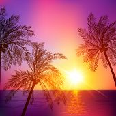 Purple tropical sunset with palms silhouettes