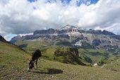 Alpine Donkey