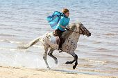 stock photo of breed horse  - Girl in blue silk scarf rides a horse of Altai breed - JPG