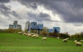 LONDON, UK - MARCH 29, 2014 Canary Wharf view from the local farm