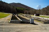 Fish Hatchery - USA