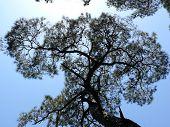 Below A Pine Forest In The Princes Isle Heybeliada