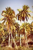Cuba Nature