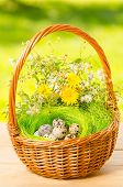 Quail Eggs In The Wicker Basket