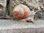 Detail Photo Of A Snail