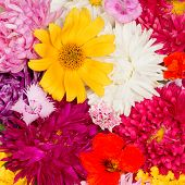 stock photo of nasturtium  - a lot of colorful flowers asters kosmeya nasturtium carnation marigold - JPG