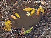 Autumn Puddle