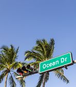 Street Sign Of Famous Street Ocean Drive In Miami South Beach