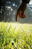 Man Reaching To Touch Fresh Green Sunlit Grass