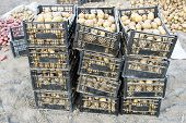 Potatoes In Boxes