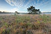 Autumn Sunrise Over Marsh
