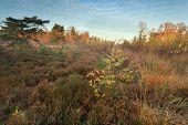 Misty Morning On Autumn Marsh