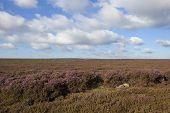 Windswept Moorland