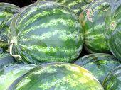 Tel Aviv Large Watermelon