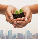 environment, ecology, pollution and nature concept - closeup of woman hands holding plant in soil over city background