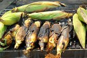 pic of corn  - Roasted barbecue corn  - JPG